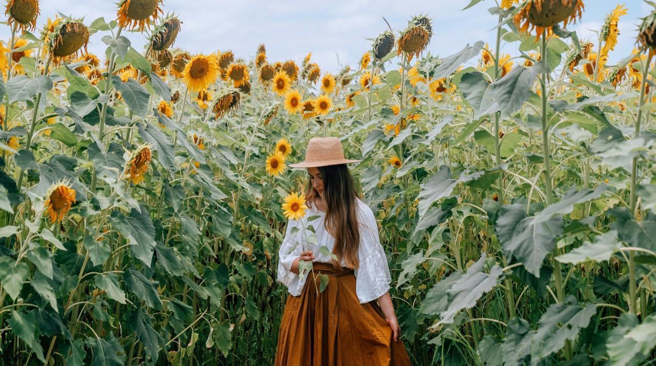 Experience Queensland Sunflower Fields Queensland